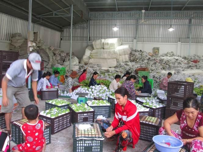 Xuất khẩu xoài sang Trung Quốc tăng mạnh