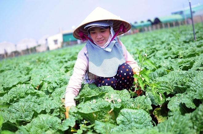 Cà phê, hồ tiêu, rau quả Việt đang xuất khẩu qua nền tảng Alibaba